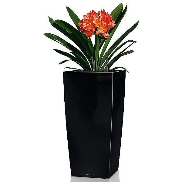 Lechuza Cubico 30 Self Watering Planter (€125) ❤ liked on Polyvore featuring home, outdoors, outdoor decor, flowers, filler, scarlet high gloss, flower planters, plastic rectangular planters, rectangular flower planters and plastic planters
