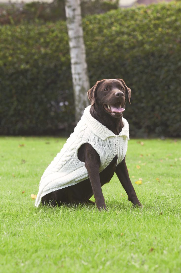 Även våra fyrbenta vänner behöver något värmande i vinterkylan. Sticka en flätmönstrad tröja till hunden.