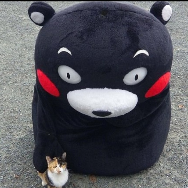 Kumamon loves kitty (kitty loves Kumamon too)