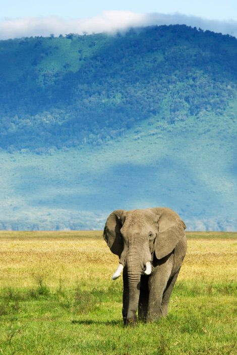 Arusha, Tanzania ...I would not only love to go here to see this elephant..but also my sister.