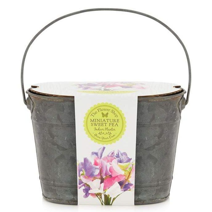 Christmas Gift Ideas For Your New In Laws Debenhams Grow Your Own Miniature Sweet Pea Planter Gifts For Inlaws Christmas Gifts Gifts