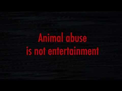 animal cruelty in sports and entertainment He was found guilty of one misdemeanor count each of cruelty to an animal and failure to care for an animal  sports entertainment opinion place an.