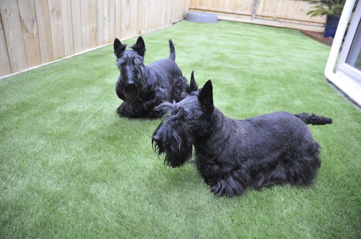 Topsy and Lucy out in the new lawn for the first time