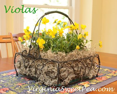 Violas in Southern Living at Home Jamestown basket
