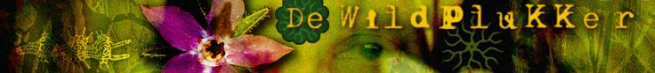De Wildplukker » vlierbloesemsiroop