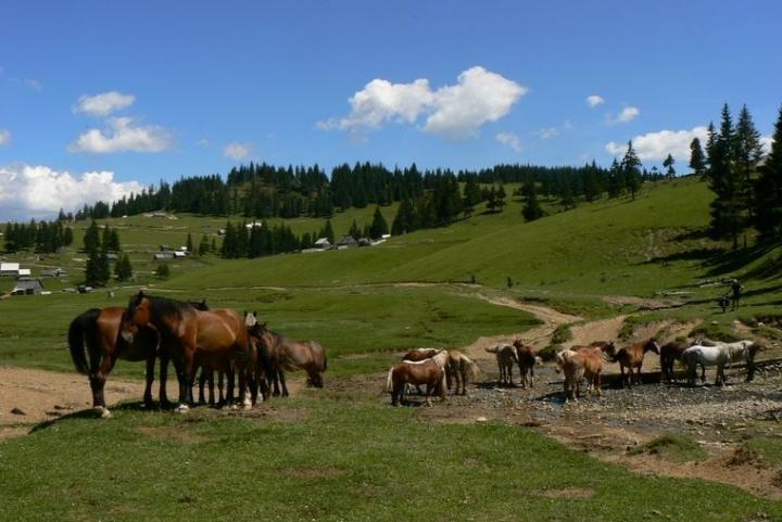 Apuseni - cestou kolem dřevorubeckých vesniček  #romania  #apuseni