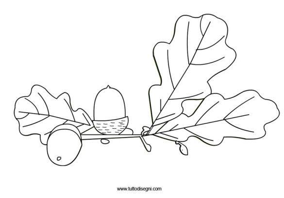 foglie-quercia-ghiande