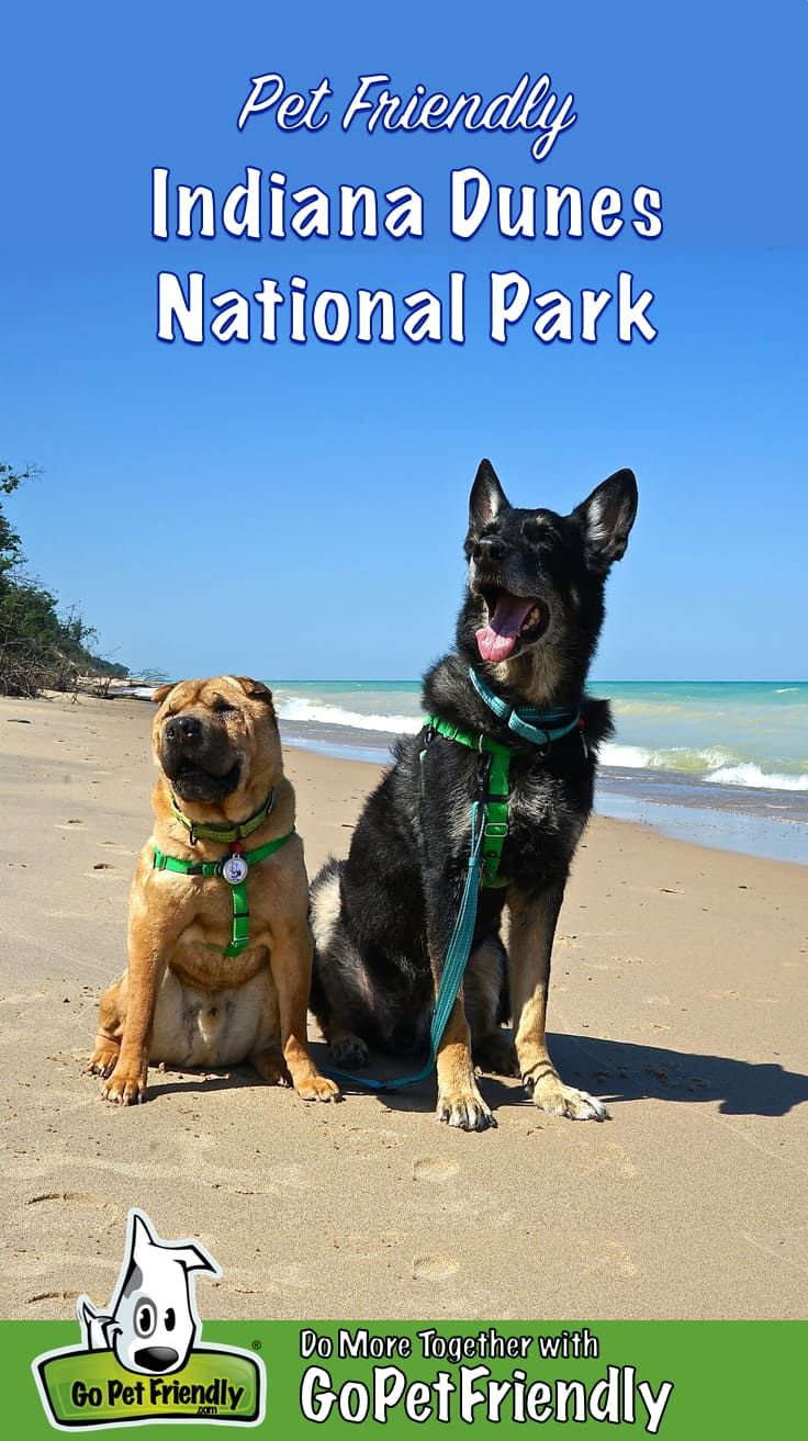 Pin On Dog Friendly National Parks