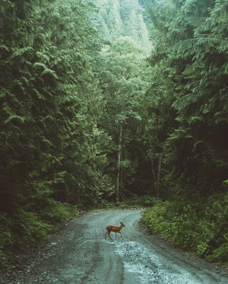 early morning trek in the forest of British Columbia, Canada. -