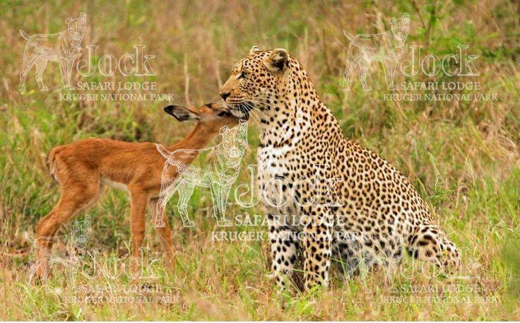 Great #Wildlife Sightings at #Jock in November.