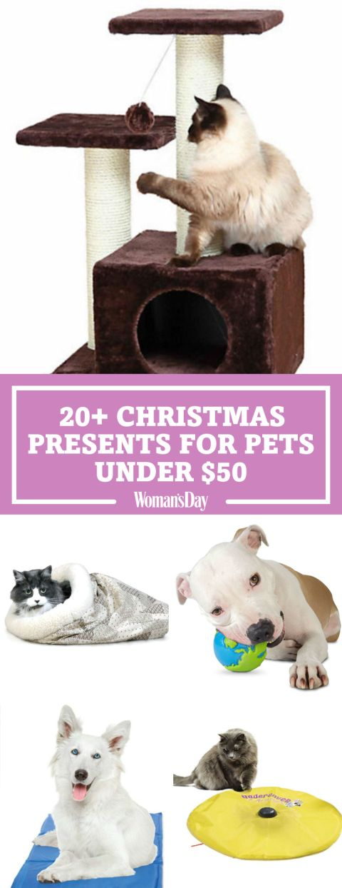 Thank your furry friends this holiday season for being such cuddly companions with these holiday treats under $50, These gifts are great to buy your pets if you're on a budget. Training bones will keep your pup active as they search for the hidden treats at only $12.99.