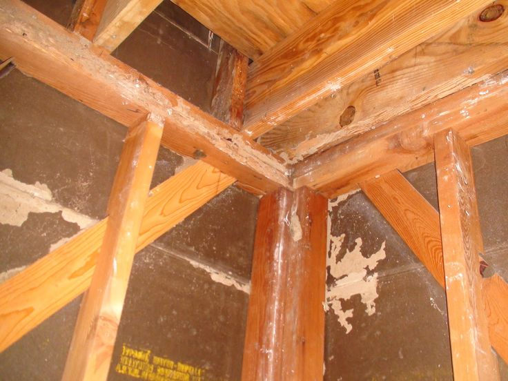 17 Best Images About Home Termite Control On Pinterest Signs Of Termites Home And Soldiers