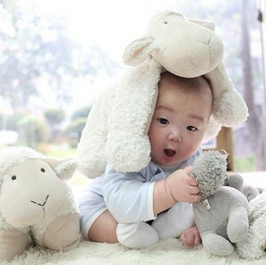2015: Song Minguk Lunar New Year-Year of the Sheep