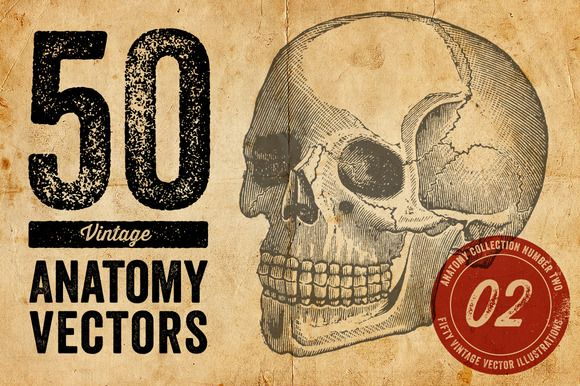 50 Vintage Anatomy Vectors by Offset on Creative Market