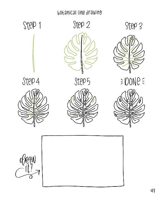 Botanical Leaf Drawing
