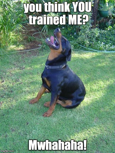 rottwiler with captioon | Condescending Rottweiler | you think YOU trained ME? Mwhahaha! | image ...
