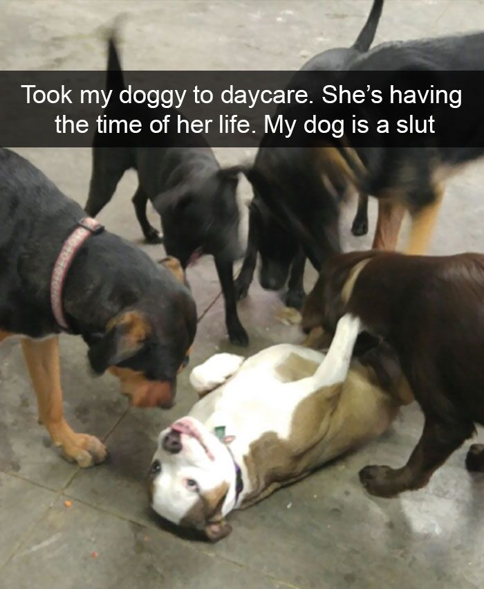 10+ Hilarious Dog Snapchats That Are Impawsible Not To Laugh At (Part 2) https://www.pinterest.com/lahana/psycho-animal-nut/