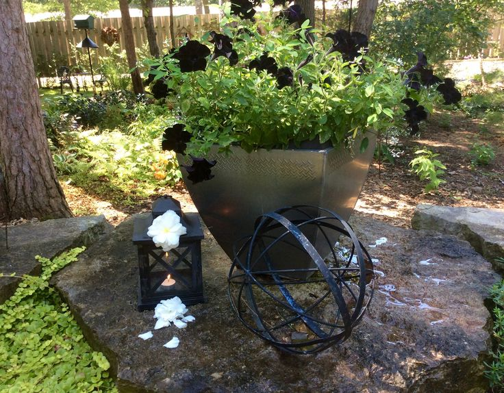 Black pansy pot a tribute to my 2 black felines who now have wings.