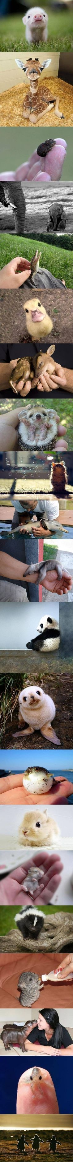 Verschiedene Tierbabys
