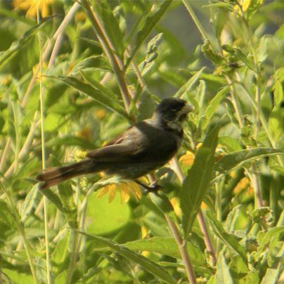 Solo en Jujuy se encuentran 550 especies de aves distribuidas en tres eco regiones que conforman más de la mitad de las especies en el país. Si eres fan de las aves, esta provincia es un punto que no puedes pasar por alto.