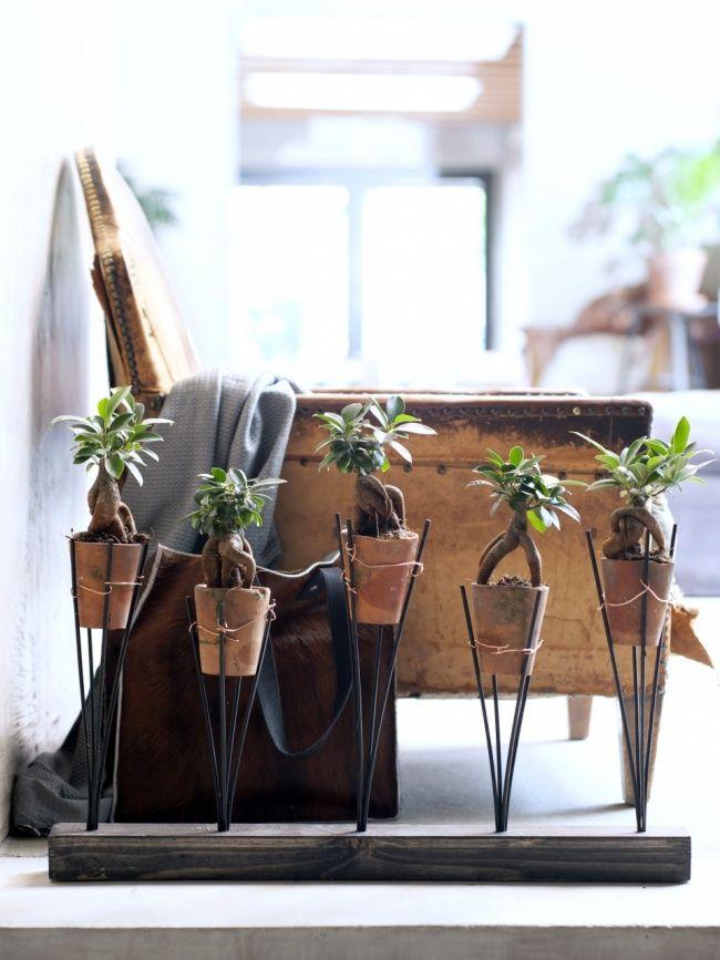DIY-tip: Stoere plantenhouder voor je Ficus Ginseng   Mooi wat planten doen
