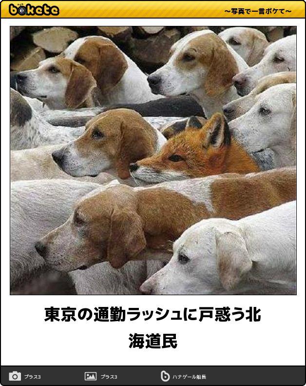 東京の通勤ラッシュに戸惑う北海道民