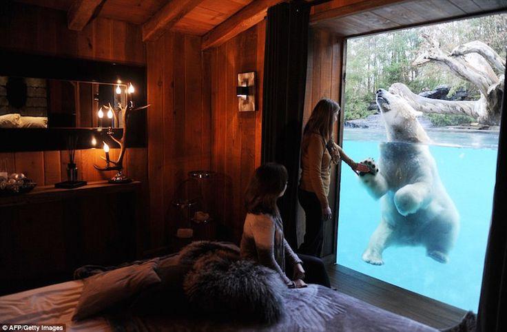 Zoo de La Fleche Le Tertre Rouge, La Flèche, Pays-de-la-Loire 72200 France At La Flèche Zoo in Loire Valley, you can share a room with a thousand pound Polar Bear
