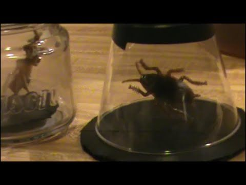 making moving bugs youtube - Youtube Halloween Crafts