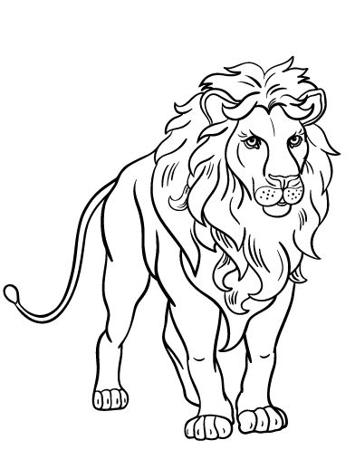 Best 25 Lion Coloring Pages Ideas On Pinterest