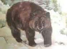 The Atlas bear was Africa's only native bear that survived into modern times. Once inhabiting the Atlas Mountains and neighbouring areas, from Morocco to Libya, the animal is now thought to be extinct. The Atlas bear was brownish black in colour, and lacked a white mark on the muzzle. The fur on the underparts was reddish orange. The fur was 4–5 inches (100–130 mm) long. The muzzle and claws were shorter than those of the American black bear, though it was stouter and thicker in body. It…