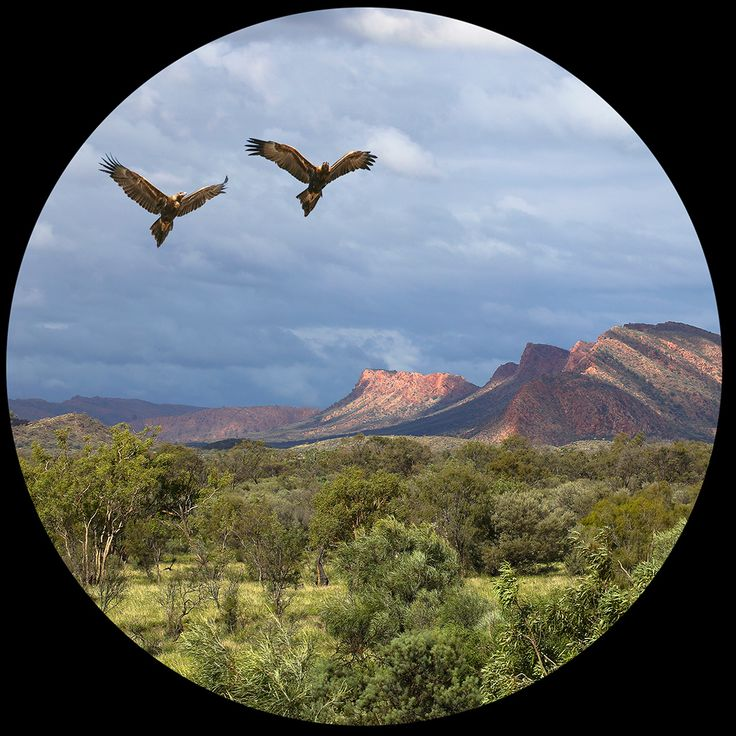 Possible plate design - Wedge-tailed Eagles over the East Macdonnell Ranges (resized for web from print version)