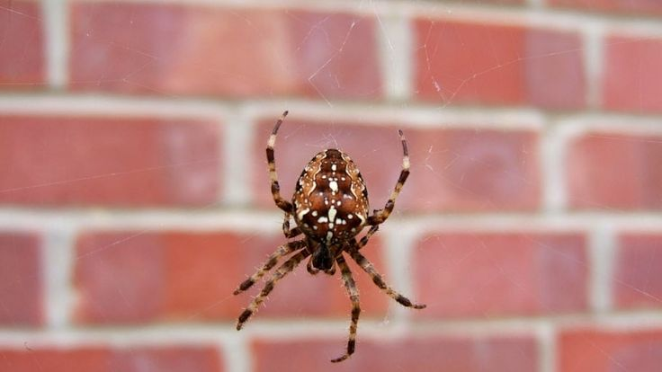 No one wants spiders in their home. Learn how to keep them away!   #home
