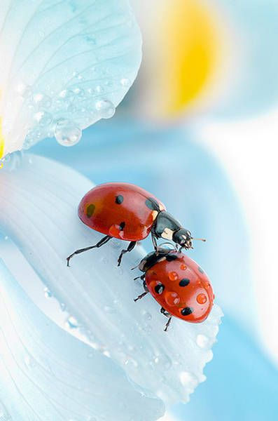 El color de los insectos.