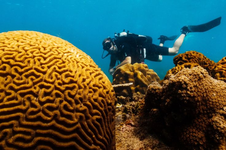 #Diving in #ConDao is relatively easy, with limited currents and shallow dive depths.