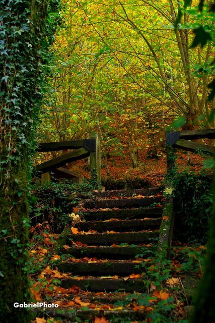 Fragas do Eume Natural Park, La Coruña, Galicia - Spain