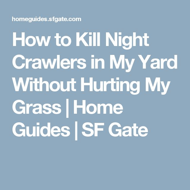 How to Kill Night Crawlers in My Yard Without Hurting My Grass   Home Guides   SF Gate