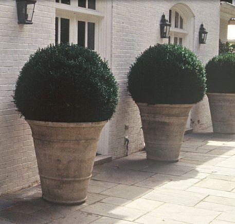 Giant boxwood plantersFLANK FRONT DOORS,,!,,,                                                                                                                                                      More