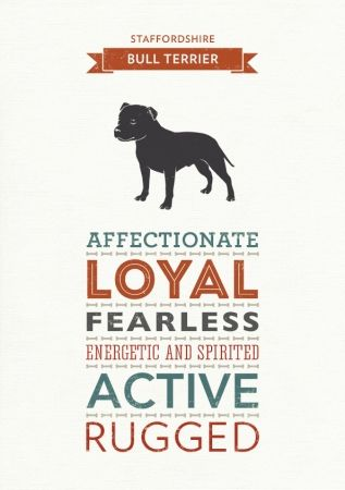 "English Staffordshire Bull Terrier - the ""nanny"" dog"