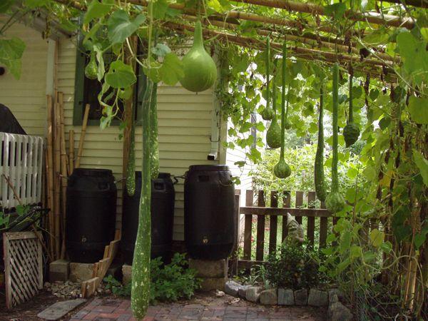 13 best trellis images on pinterest bamboo trellis garden