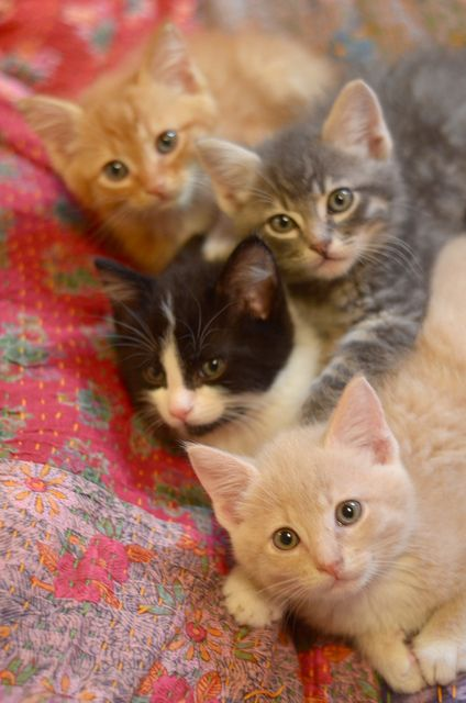 Kittens are instant love for me, but I only rescue.  I do not breed or allow breeding to happen in this overpopulated world.