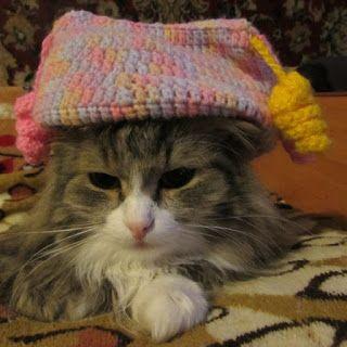 БЛОГ КОТА ВАСЬКИ: Интересные факты о кошках