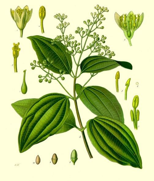 Cinnamon was already known in ancient times as indicated by its presence in the biblical texts and the writings of the authors of ancient Greece. http://www.darkchocolatecourse.com/knowledge/6-spices-for-chocolate/
