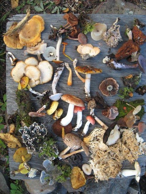 variety of garden mushrooms