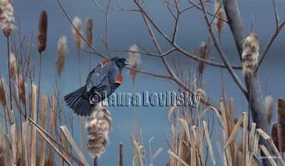 Gentleman Caller - Red-winged Blackbird  www.levitskyart.com