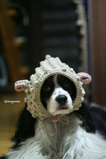 Free Crochet Dog Reindeer Hat Pattern : Little #Lamb #Hat: free #crochet pattern Crazy Cool ...