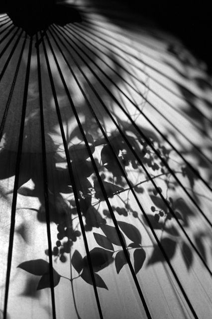 Japanese umbrella, Wagasa 和傘