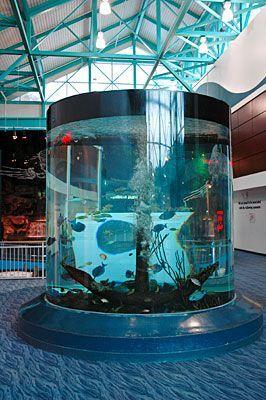 1000 Ideas About Gatlinburg Aquarium On Pinterest