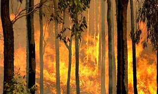 Australian Bushfire Survival Plans and Advice ~ Aussie Prepper