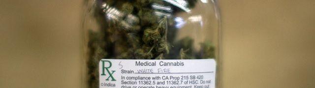 Amerikaanse overheid bevestigt dat cannabis kankercellen doodt - http://www.ninefornews.nl/amerikaanse-overheid-bevestigt-dat-cannabis-kankercellen-doodt/
