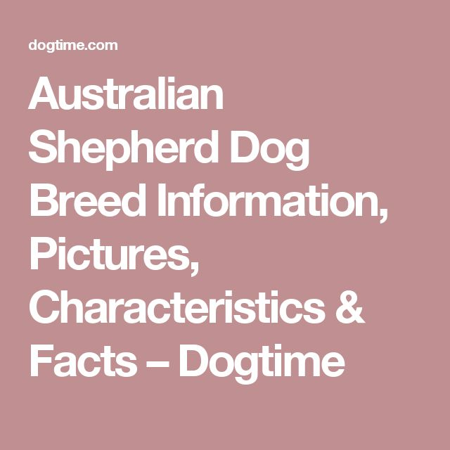 Australian Shepherd Dog Breed Information, Pictures, Characteristics & Facts – Dogtime